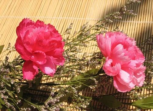 Ý nghĩa hoa cẩm chướng hồng
