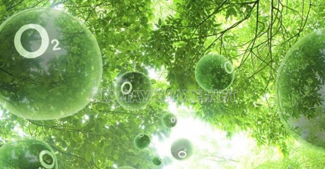 Vì sao quang hợp có vai trò quyết định sự sống trên Trái Đất